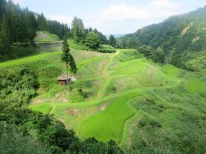 松之山の棚田
