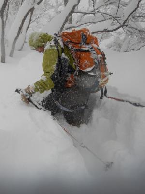 滋賀県野坂山地2017年1月