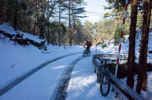 粟鹿山に登る林道