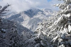 林道からみる朽木・白倉岳